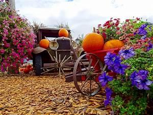 Kostenlose Bilder Herbst : kostenlose foto blume dekoration lkw ernte produzieren herbst garten jahreszeit blumen ~ Yasmunasinghe.com Haus und Dekorationen