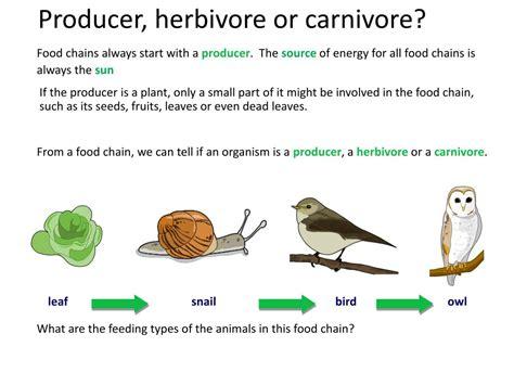 producer ecosystem herbivore food energy chains start feeding relationships herbivores carnivore carnivores omnivores following sun ppt powerpoint presentation always slideserve