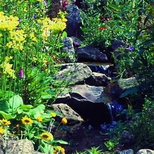 Pflanzkörbe Für Blumenzwiebeln : naturagart shop bachpflanzen 10 online kaufen ~ Lizthompson.info Haus und Dekorationen