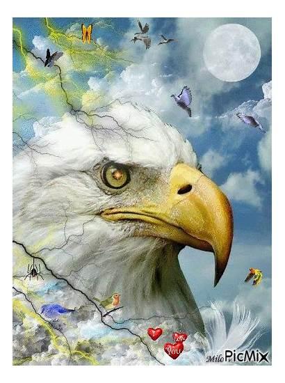 Eagle Bald Picmix Animals