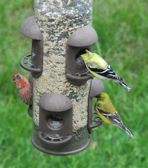 finch bird feeder finch bird feeders images bird cages