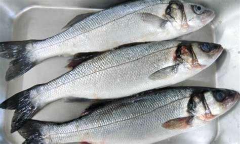 cuisiner le loup de mer recettes de poisson idées de recettes à base de poisson