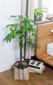 Pflanzen Im Schlafzimmer : zimmerpflanzen im schlafzimmer garten fr ulein ~ Indierocktalk.com Haus und Dekorationen