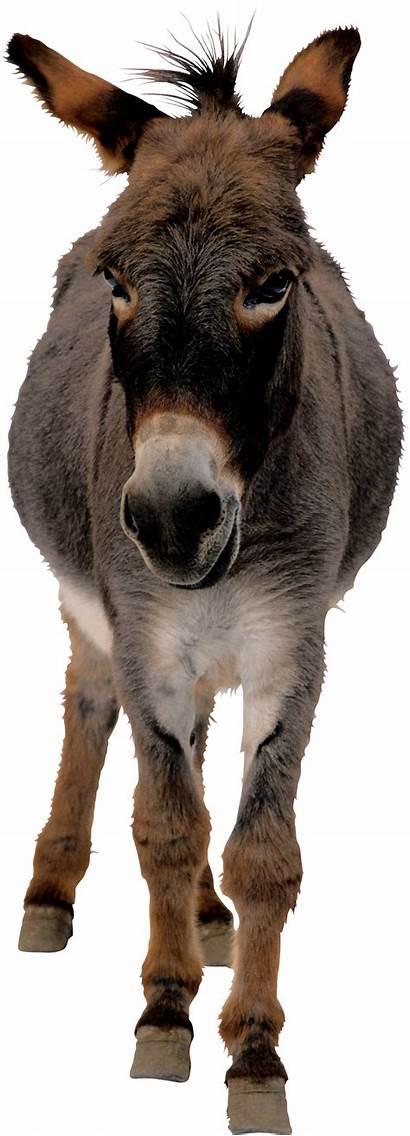 Donkey Transparent Mule Shrek Designs Pngimg Background
