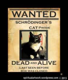 schrodingers cat schrodinger s cat photos schrodinger s cat images