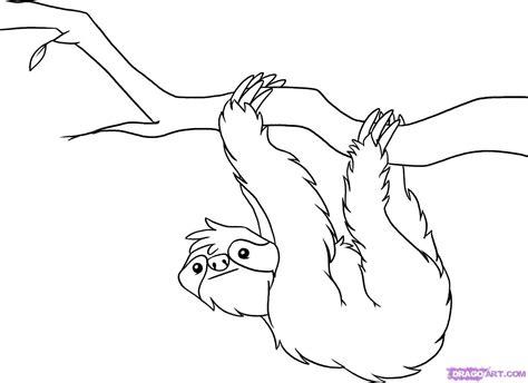draw  sloth step  step rainforest animals