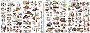 Tropical Land Snail Diversity