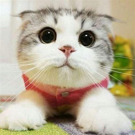 Cute Cats Bdfjade
