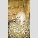 White Owl Baby | 1089 x 1936 jpeg 257kB