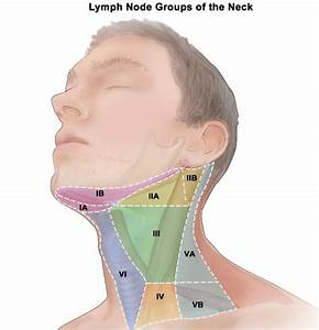 Head And Neck Lymph Node Location