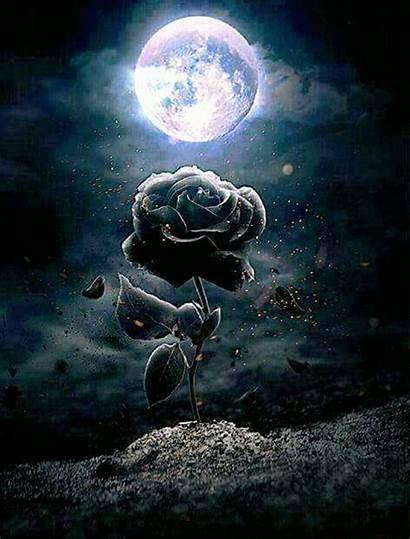 Moon Rose Luna Painting Diamond Gothic Dark