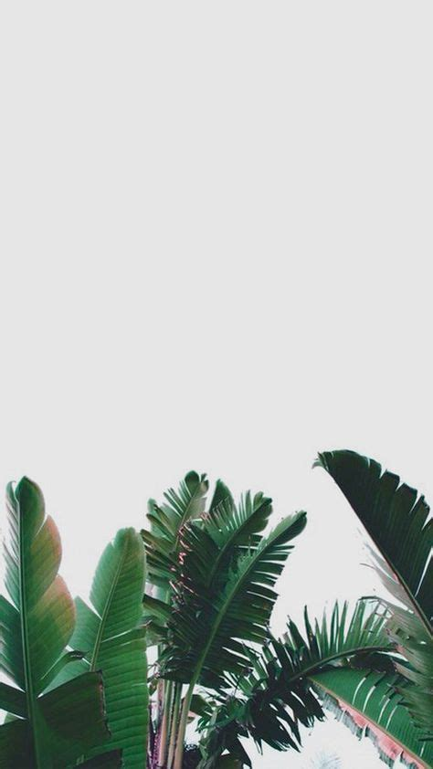 ideas plants wallpaper iphone tumblr tanaman hijau