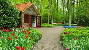 Miscellaneous: Freshness Flowers House Park Tulips Summer ...