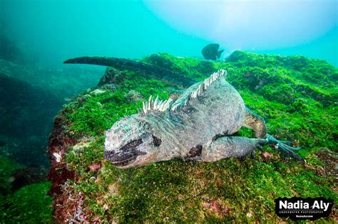 Dive Destinations by Top Ten Dive Destinations Supporting Marine Reserves