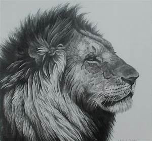 Pencil Drawings: Lion Head Pencil Drawings