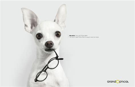 20 Splendid Dog Ads