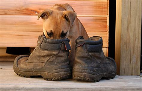 Smelly Men Boots Wwwtopsimagescom