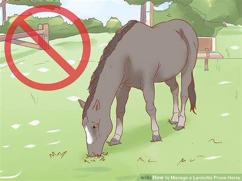 laminitis horse prone manage wikihow