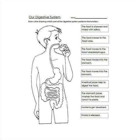 the human digestive system worksheet homeschooldressage