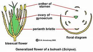 Flower Terminology  Part 3