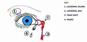 Slap Tear Diagram
