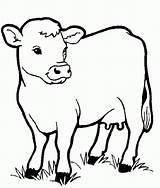 Coloring Printable Cows Cow Animals Animal sketch template