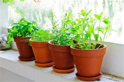 Window Sill Herb Garden Pots by How To Make A Windowsill Herb Garden Grow Culinary Herbs