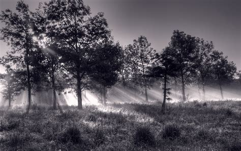 black  white forest background  desktop pixelstalknet