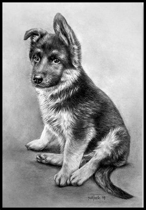 pencil drawings  dogs images  pinterest