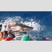 scary-pictures-of-great-white-sharks