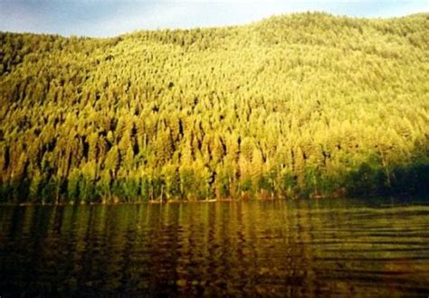 Canadas Boreal Forest Hubpages