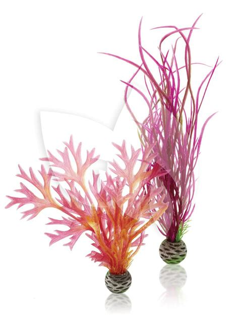 roze aquarium decoratie biorb planten medium rood roze aquarium decoratie