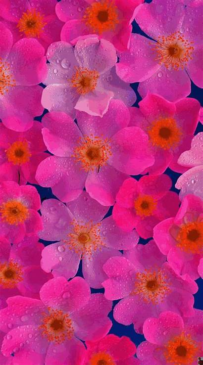Flower Iphone Floral Backgrounds Wallpapers Australia Flowers