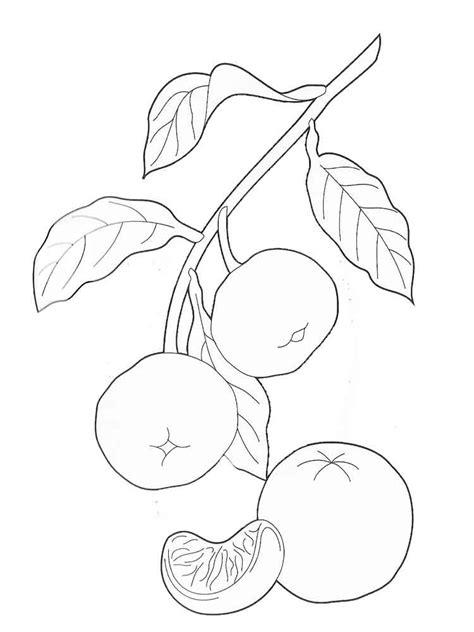 mandarintangerine coloring pages   print mandarintangerine coloring pages