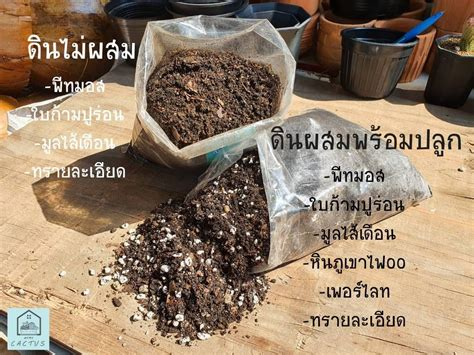 Homu cactus-บ้านแคคตัส กระบองเพชร ชลบุรี - Home   Facebook