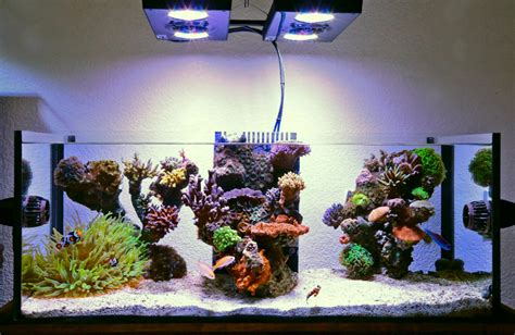5 gallon buckets 5 simple steps to your own saltwater marine depot