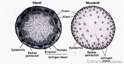organ  tumbuhan materi lengkap hedi sasrawan