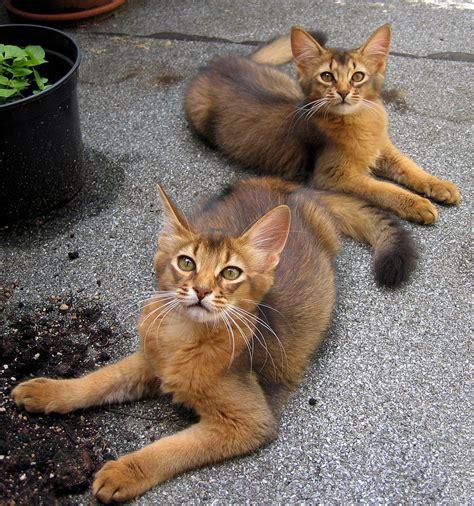Unschuld Vom Lande by Unschuld Vom Lande Foto Bild Tiere Haustiere Katzen