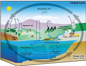 The Carbon Cycle In The Earth System