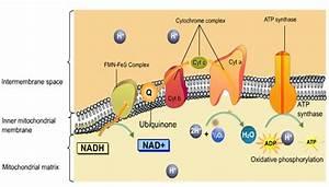 Biology Form 6  Aerobic Respiration