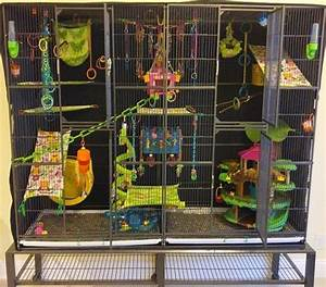 The 25 Best Pet Rats Ideas On Pinterest Rats Rat Cage And Rat Cage Diy