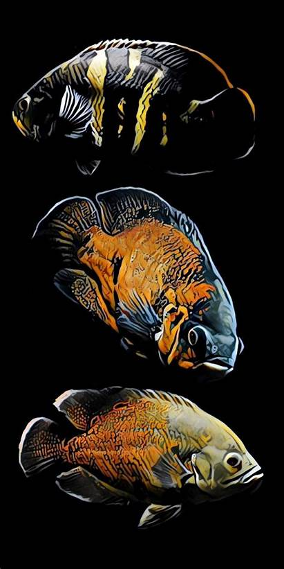 Fish Oscar Wallpapers Gold
