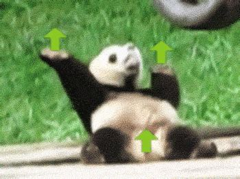 Animated Gif Meme - hilarious gif gif find share on giphy