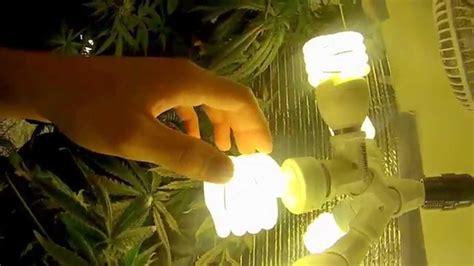 growing weed with fluorescent lights fluorescent lights trendy fluorescent lights for growing