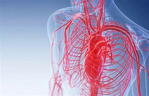 Watch  What Are Blood Vessels  What Do They Do  And How