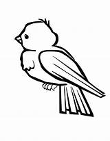 Robin Coloring Bird Pages Baby sketch template