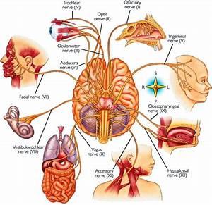 Medical Guide  Ud83d Ude37 On