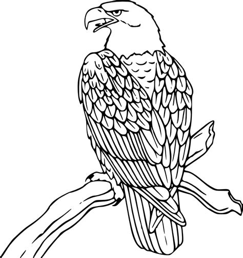 bald eagle template bald eagle outline cliparts co