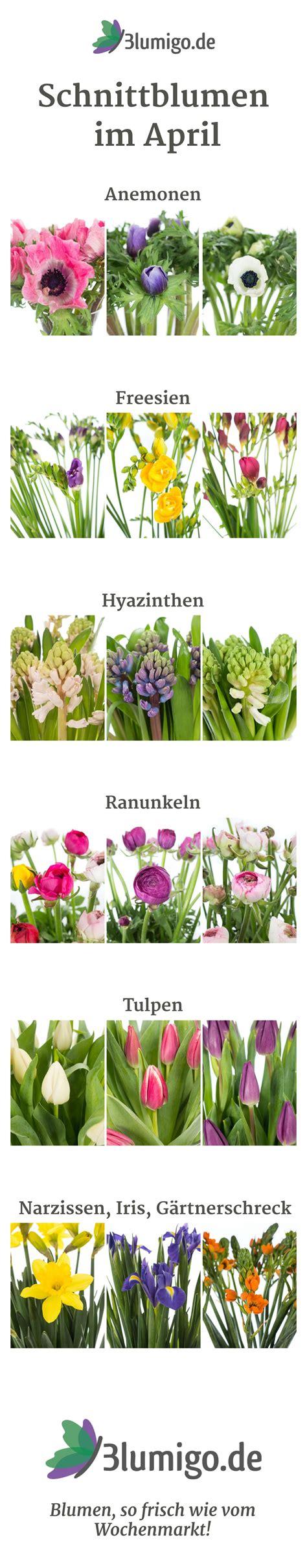 welche blumen gibt es im april schnittblumen saison