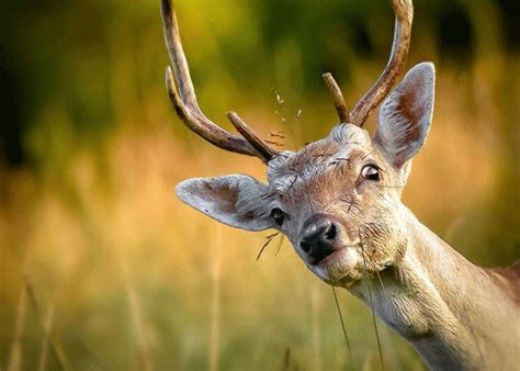 can deer see blaze orange scratcher can deers see a blaze orange vest